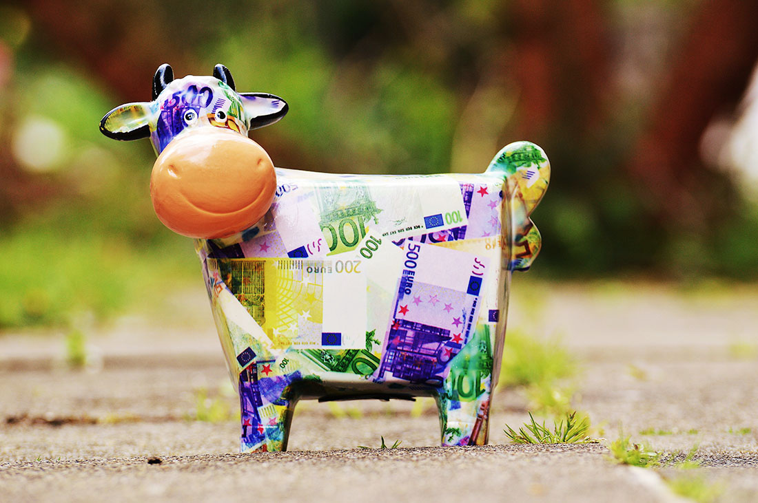 cow-1357210